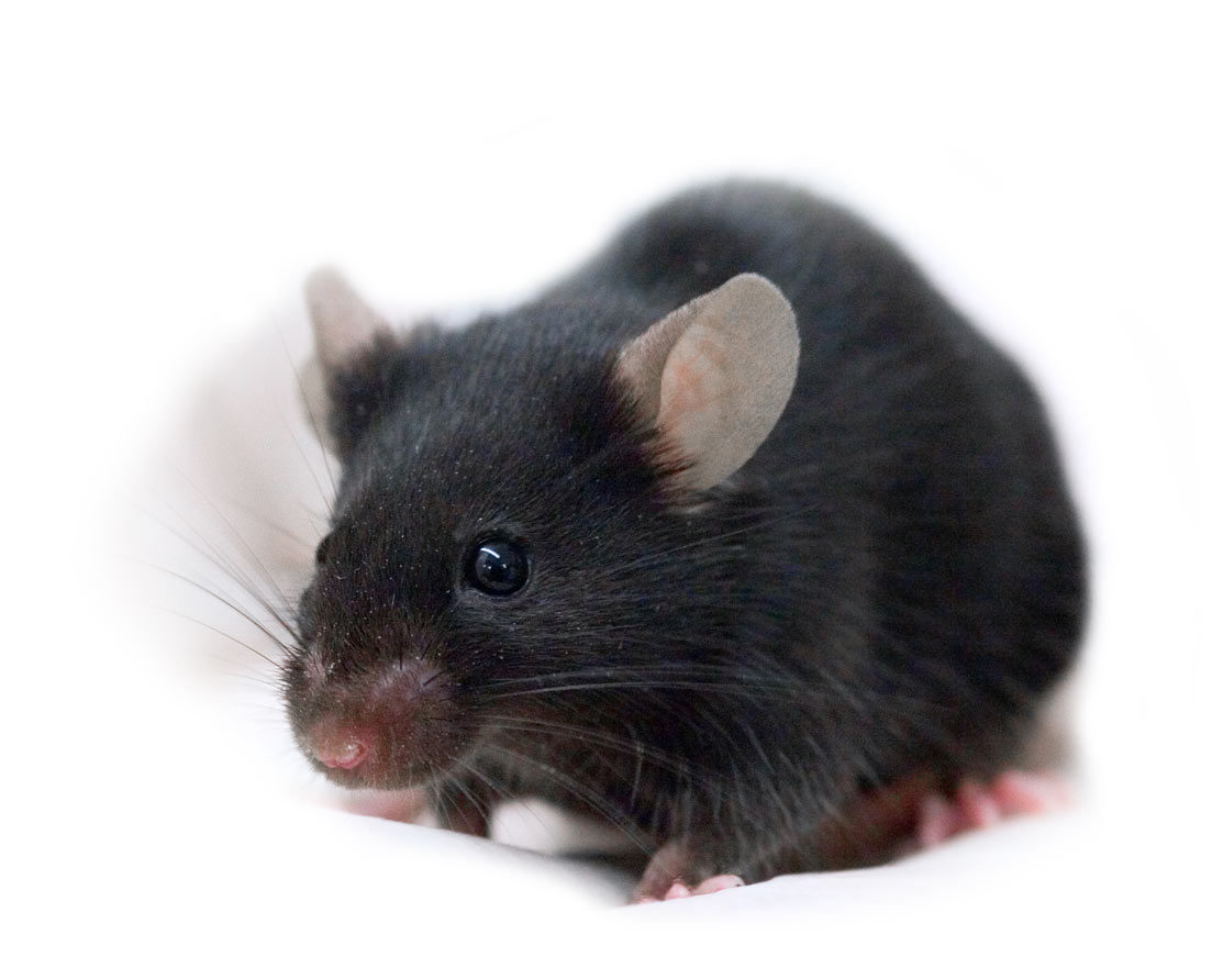 ablexis alivamab mouse